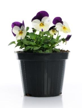 Recycling flowerpots